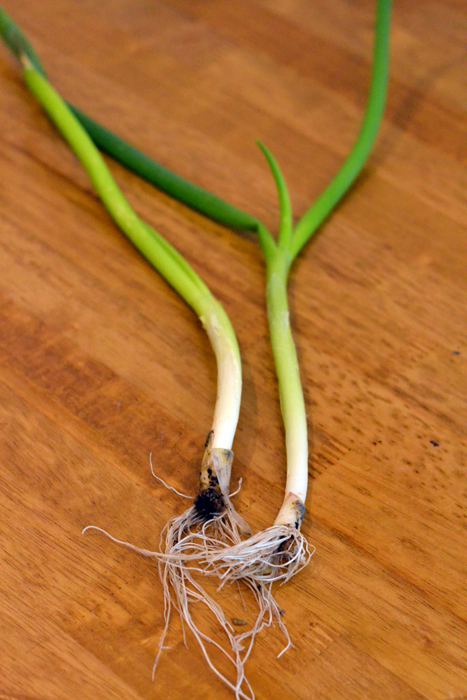 January Leeks