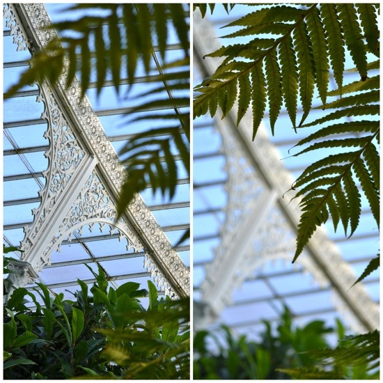 Greenhouse Glasgow Botanic Gardens.jpg