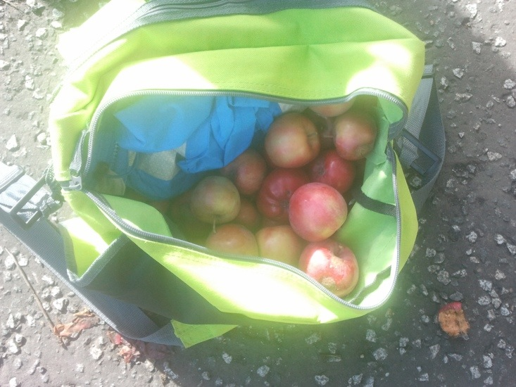 foraged apples.jpg