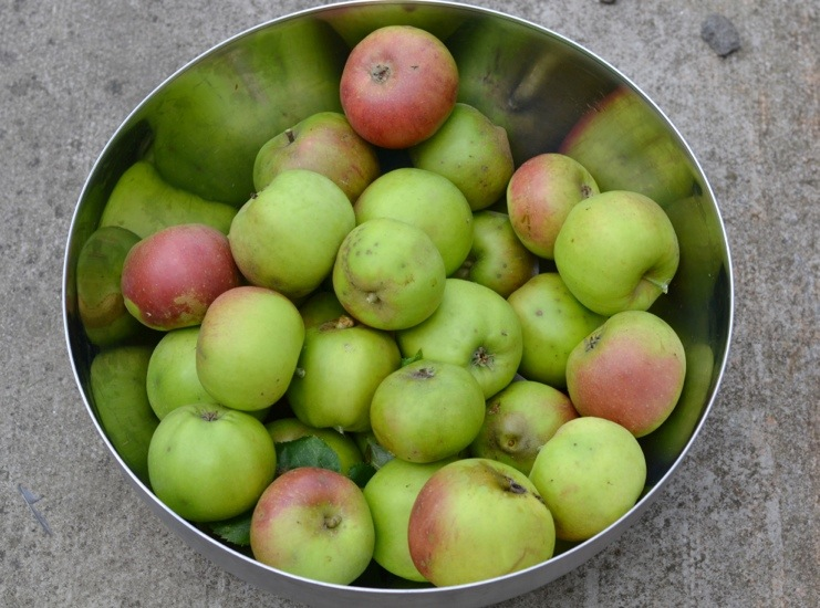 Apples from neighbour's tree.jpg