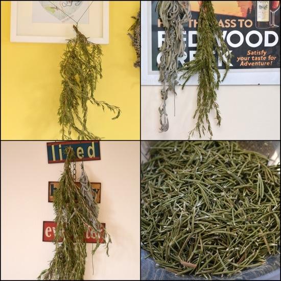 Processing Dried Herbs, Riotflower's Realm. www.riotflower.wordpress.com