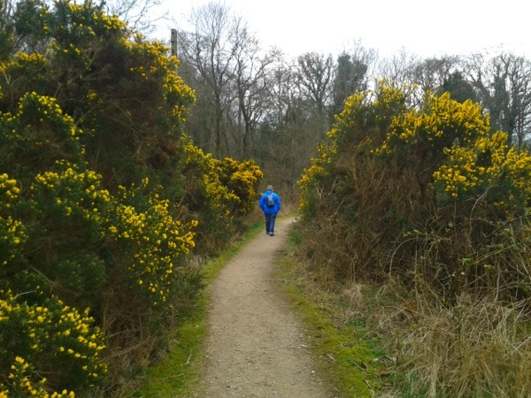walking through gorse on Arran, Scotland.jpg