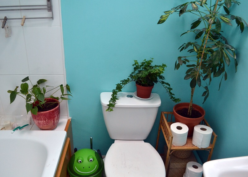 Painted bathroom with plants