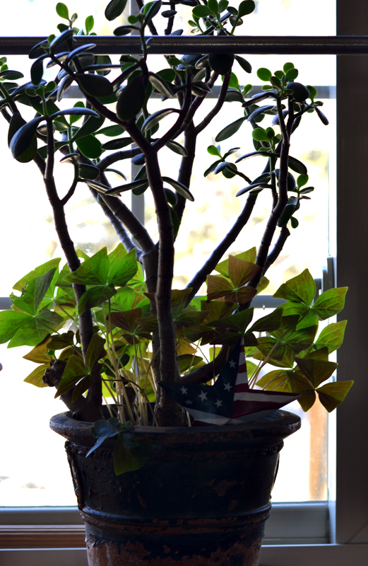 Oxalis plant with Jade