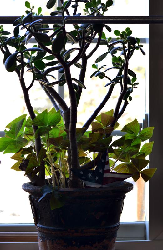 Oxalis plant with Jade