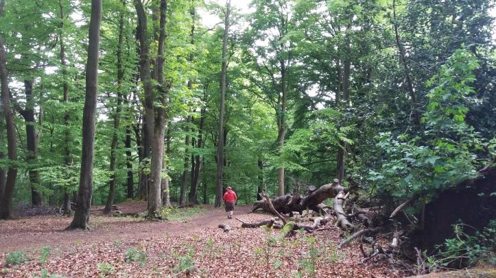woman in red hoodie walks through woods