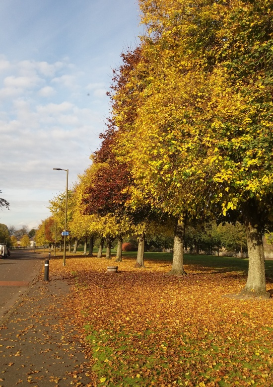 Autumn leaves and trees under blue skies on Riverside Drive in Stirling Scotland. | Riotflower's Realm