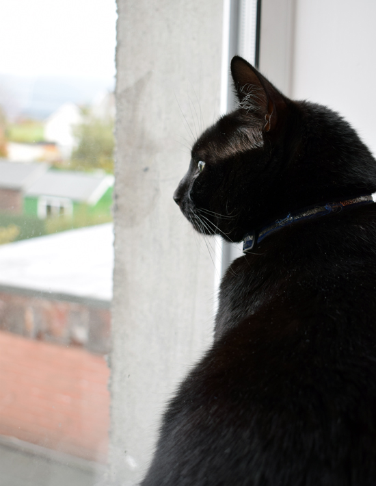 My black cat sits in the windowsill and looks out.