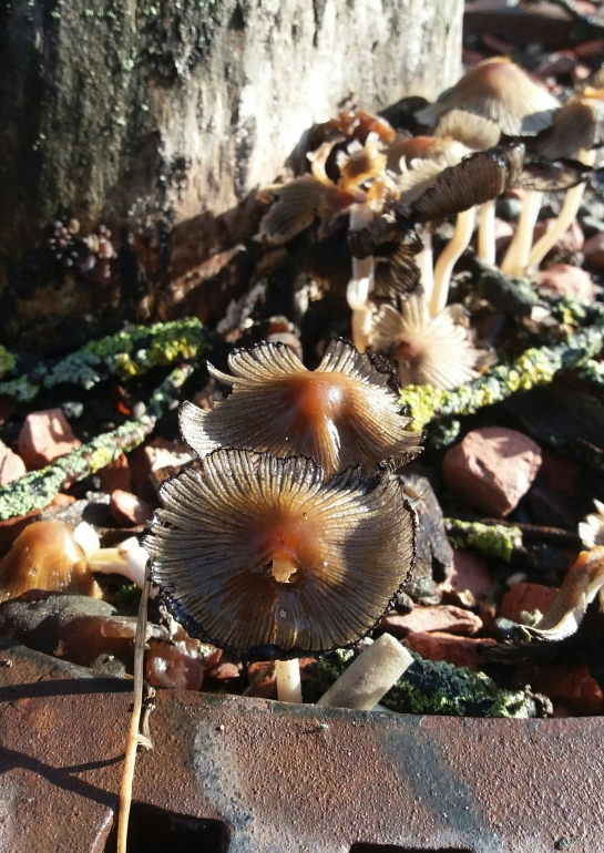 Autumn mushrooms with leaves and tree trunk